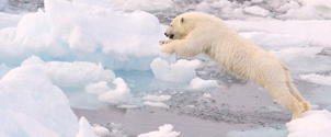 Artic tours to visit the Polar Bears
