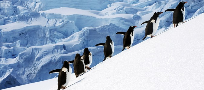 Antarctica travel information for Best way to travel to antarctica