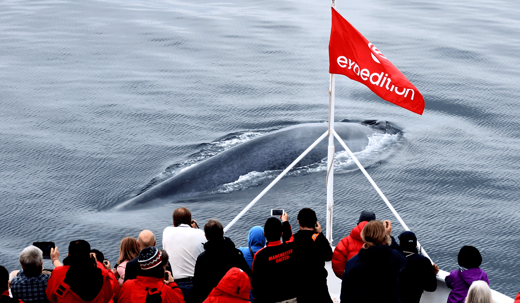 whale spotting in the arctic