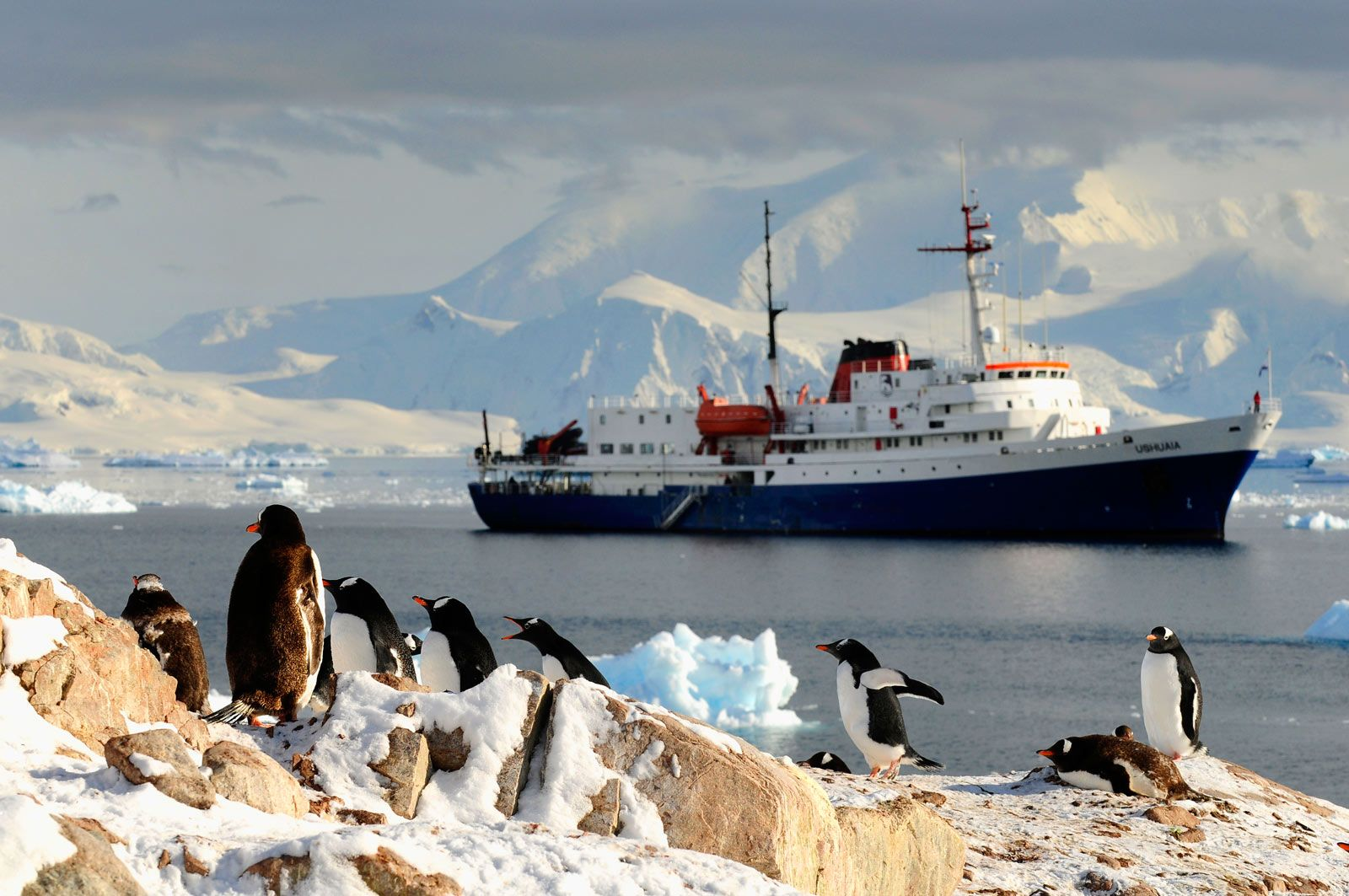 Mv Ushuaia Cruises And Packages