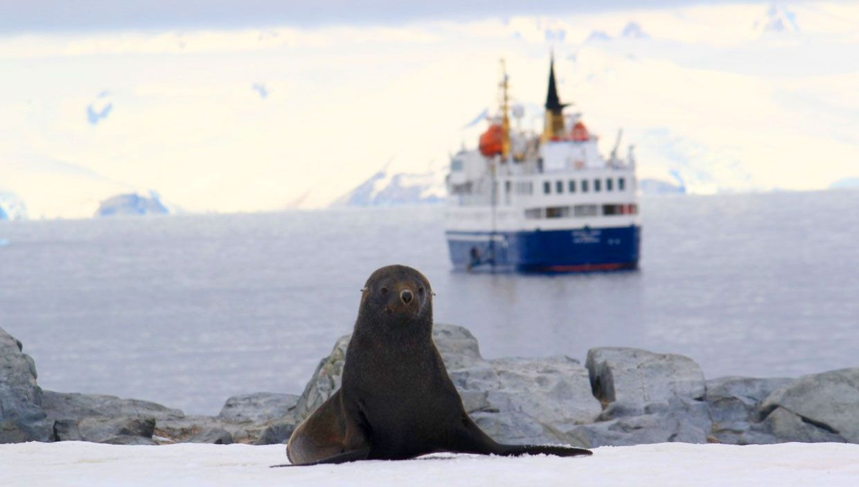 My top 10 reasons why everyone needs to visit antarctica for Can i visit antarctica