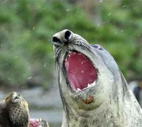 see seals close up on our antartica tours