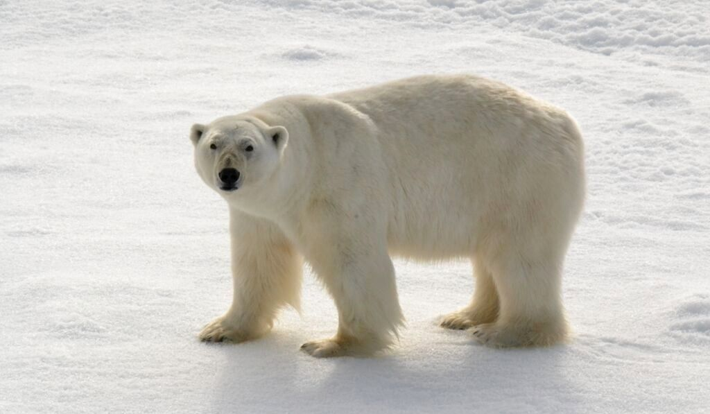 tim-arctic-1