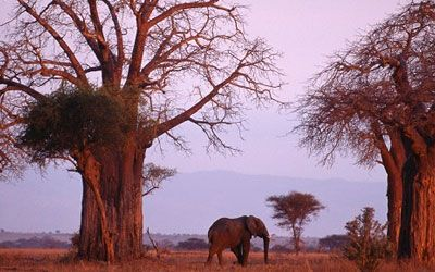 African Safari & Tours