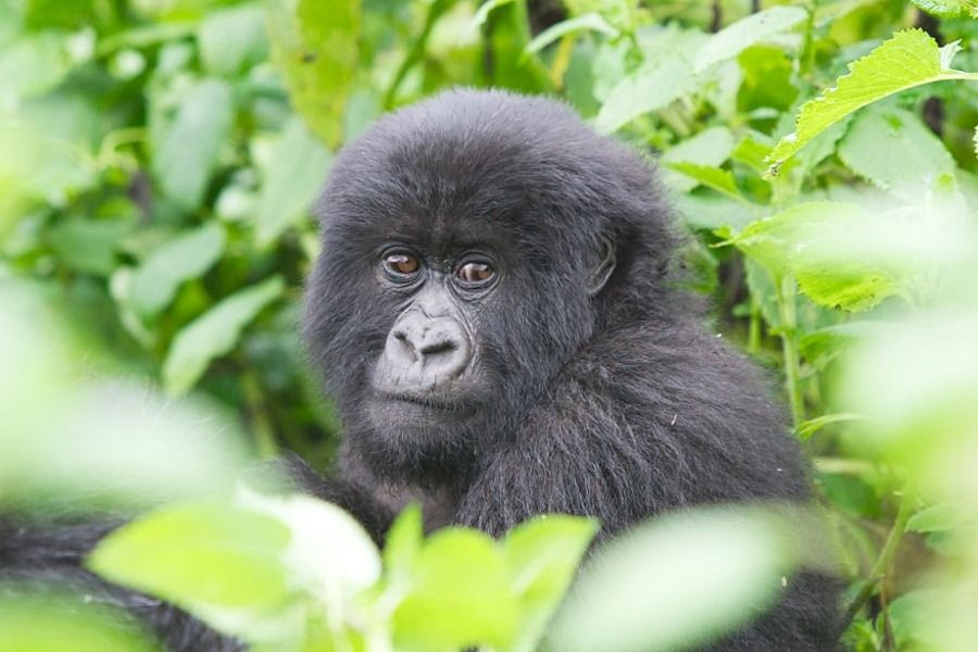 Rwanda safaris, tours and packages