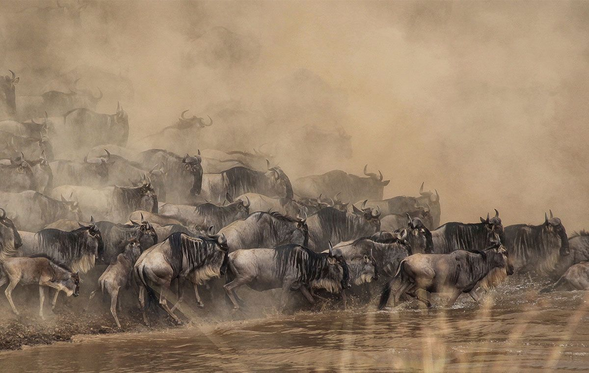 Migration River Crossing