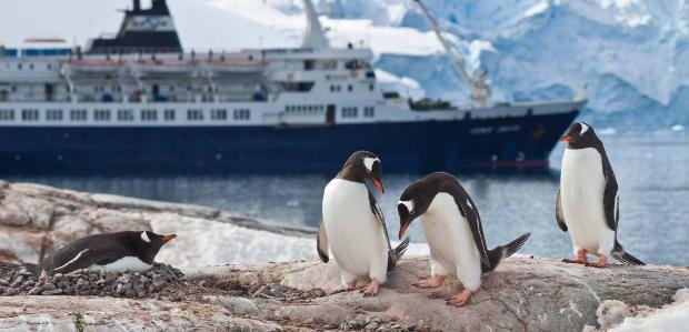 Antarctic Specials