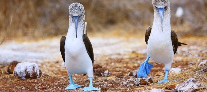Luxury Tours to the Galapagos Islands